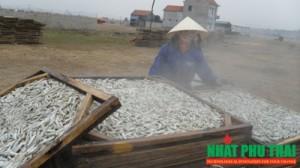 cá cơm sấy khô - phần 2
