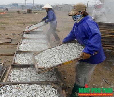 cá cơm sấy khô - phần 3