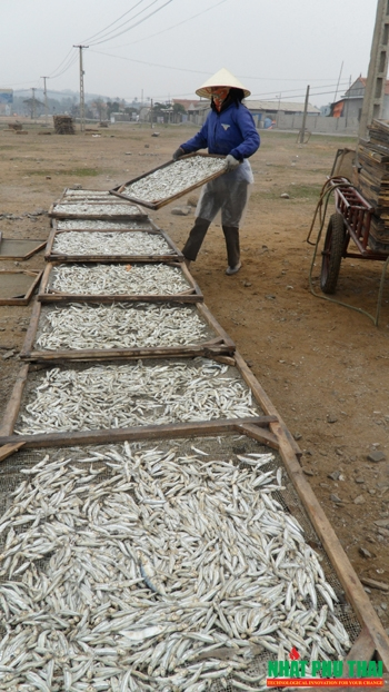 cá cơm sấy khô - phần 4